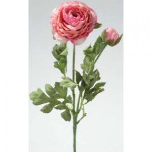 Boglárka rózsaszin