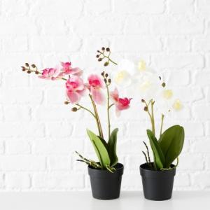 Cserepes orchidea művirág