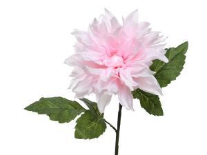 Dália halvány rózsaszin