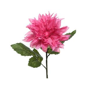 Dália pink