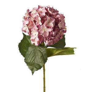 Hortenzia sötét rózsaszin