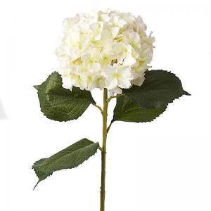 Hortenzia fehér