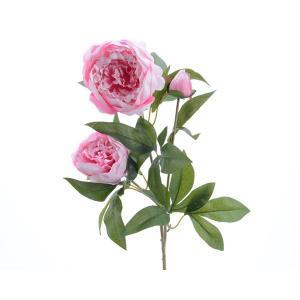 Peonia halvány rózsaszin