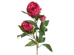 Peonia Pink