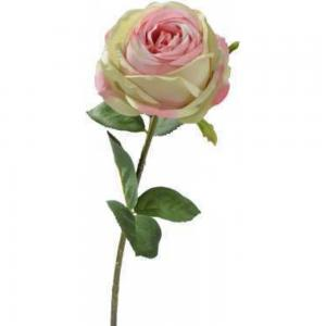 Rózsa rózsaszin