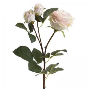 Szálas rózsa