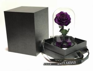 Üvegbúrás örökrózsa lila